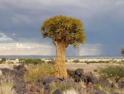 Quivertreeforest, Namibia